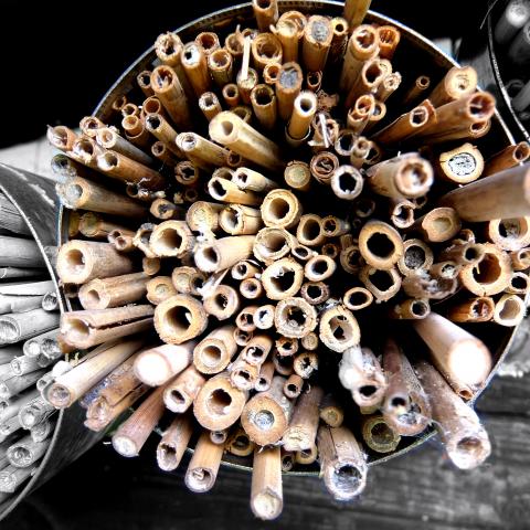 Nisthilfen für Wildbienen bauen_c_Manuel Nagel